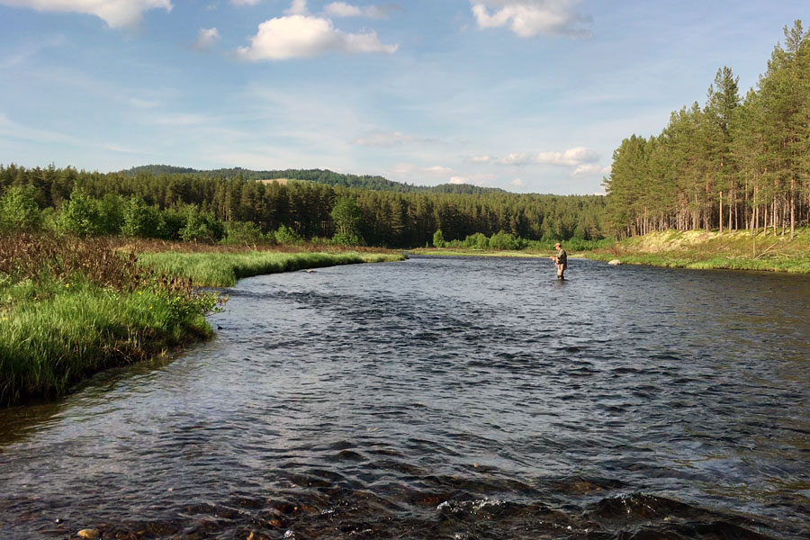 Fly fishing river Glomma at Kvennan Fly Fishing during early summer