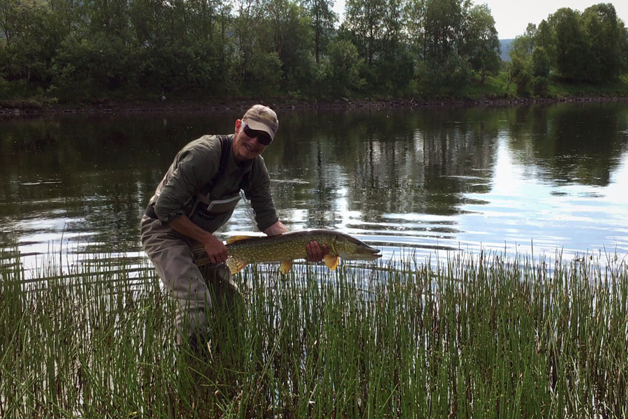 Fly fishing river Glomma at Kvennan Fly Fishing for big pike